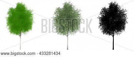 Set or collection of English Oak trees, painted, natural and as a black silhouette on white background. Concept or conceptual 3d illustration for nature, ecology and conservation, strength, endurance