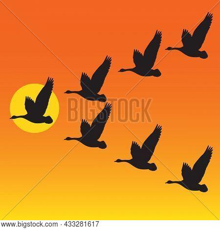Flock Of Migrating Geese Flying In V-formation Against Sunset Or Sunrise. Vector Illustration Of Gro