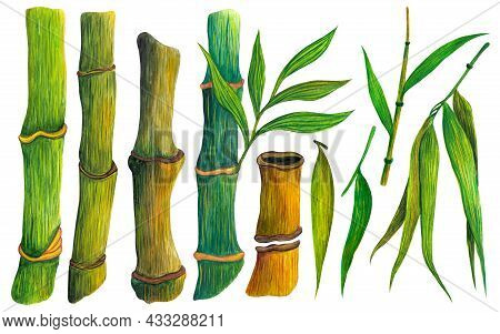 Watercolor Set Of Stems And Leaves Of Bamboo. Hand-drawn Illustration Isolated On White. Fresh Stems