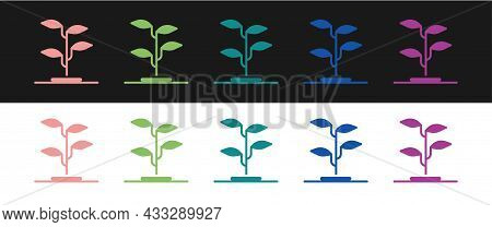 Set Sprout Icon Isolated On Black And White Background. Seed And Seedling. Leaves Sign. Leaf Nature.