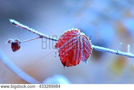 nice abstract frozen leaf in hoarfrost