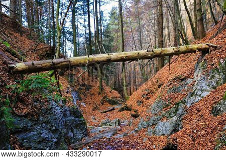 old dry log between the slopes of the gorge in the mountains. Autumn in Slovakia, Tatra mountains