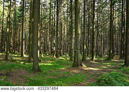 Beautiful Nature Background With Forest. Summer Day With Trees And With Sun Rays For Rest And Relaxa