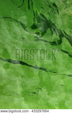 Cyanobacteria In The Water. Dirty Green Water In A Pond / Dam In Summer. Dangerous Bathing For Aller