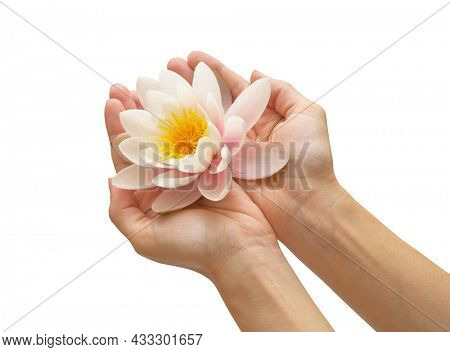 Water lily in woman hands. Element of design.