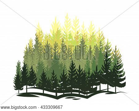Forest Silhouette Scene. Landscape With Coniferous Trees. Beautiful View. Pine And Spruce Trees. Sum