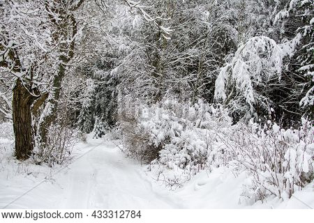 Snowfall Forest Scene Cold Winter Weather Snowy Trees Landscape