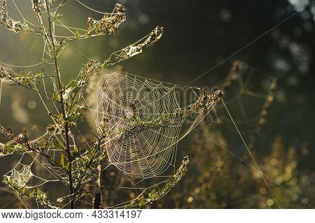 Cobwebs On Field Plants, Morning Sunshine, Blurred Background, Dry Flowers, Web, Bokeh, Warm Sunligh