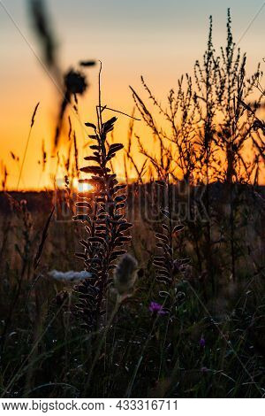 Vertical Photo Of Daybreak Over The Meadow. Sunrise In The Field With Grass Silhouette. Sunset At Th