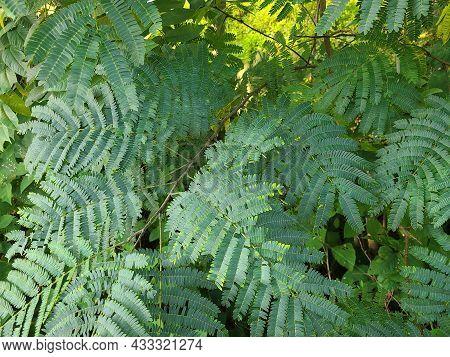 Beautiful Luscious Ferns Of The Northern Virginia Wetlands