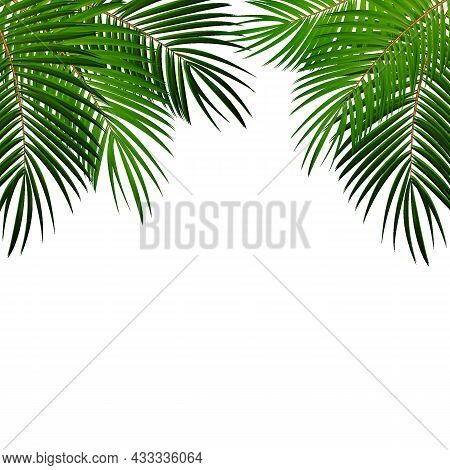 Palm Leaf On White Background With Place For Your Text Vector Illustration