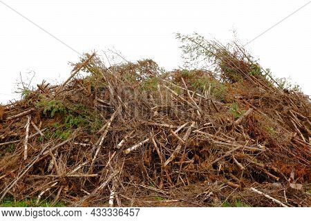 A Huge Pile Of Felled Trees In The Open Air.illegal Logging.harvesting Of Firewood.improper Storage