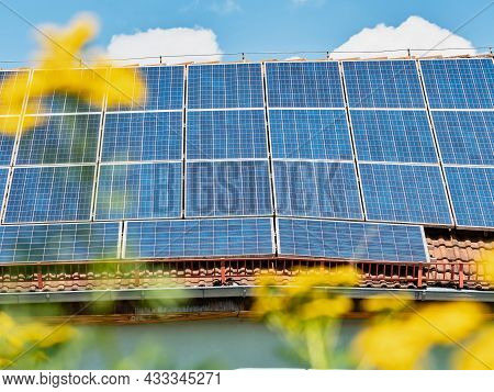 View Through Agriculture Rape Field And Blue Solar Photovoltaic Panels On A Roof At Sunset. Clean En