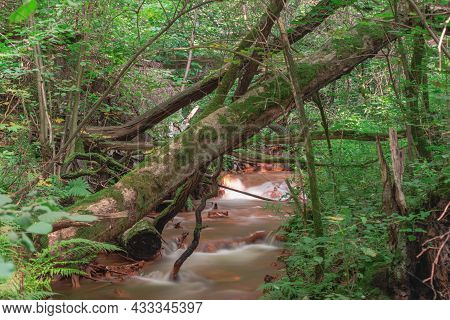 Tall, Dense, Deciduous Forest. A Deep Valley With A Small Stream At The Bottom. The Bottom And The E