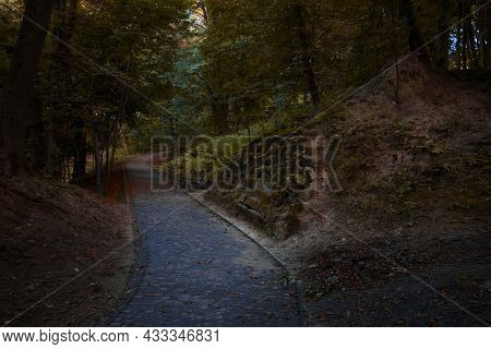 Enchanted Forest Fantasy Nature Landscape View Of Wood Land With Footpath Trail Between Ruined Ancie