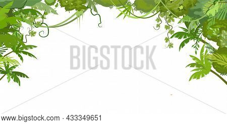 Rainforest Canopy. Jungle Frame. Branches Of Tropical Trees, Grasses And Bushes. Horizontal Composit