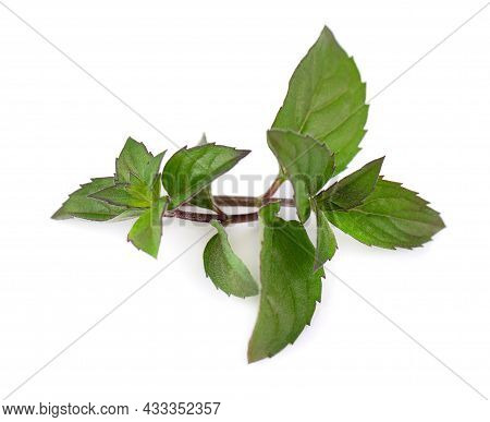Fresh Peppermint Isolated On White Background. Mint Leaves.