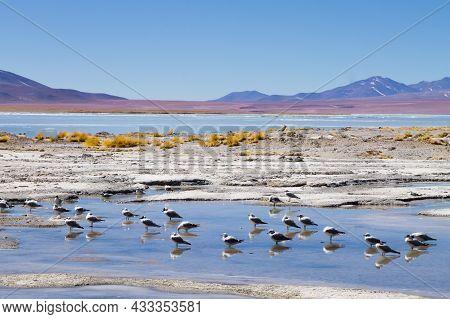 Bolivian Lagoon Landscape, Aguas Termales De Polques,bolivia.