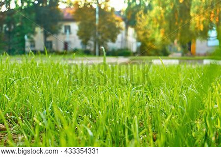 Green Grass, Lawn, Lawn. Bright Summer Sunny Day, Large Space, Grass In The Foreground, And Trees In