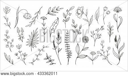 Doodle Wood Flowers. Hand Drawn Forest Plants Foliage. Fern Branches And Herbs With Blossoms. Outlin