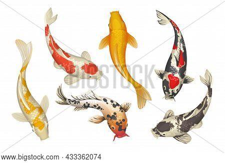 Koi Fish. Cartoon Chinese Traditional Pond Carp. Oriental Japanese Goldfish Collection. Nature Zen.