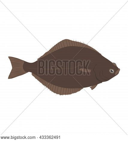 Atlantic Halibut - Side View - Flat Vector Isolated