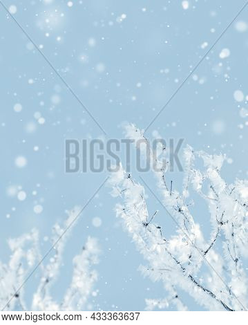 Sparkling Snow On Branches Of Tree, Frost On Twigs At Sunny Winter Day. Nature Background, Cold Wint