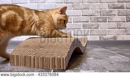 Cat Sharpening Claws On The Scratching Post On Gray Wall Background