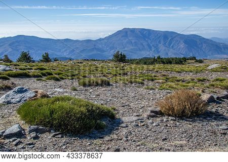 High Mountain Landscape In Sierra Nevada Of Grasslands, Mountains And A Group Of Pine Trees