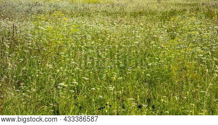 Full Frame Sunny Herbal Hayfield At Summer Time