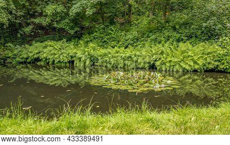 Idyllic Riparian Scenery At A Forest Around Sankt Martin, A Municipality In Suedliche Weinstraße Dis