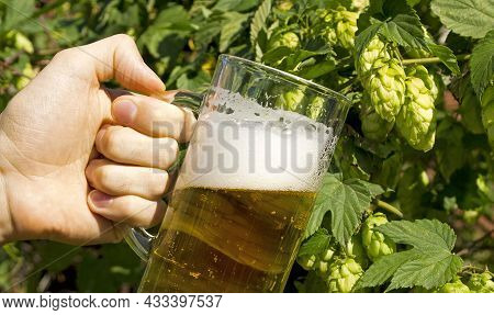 Banner.a Glass Of Light Beer In A Man's Hand Against The Background Of A Bush Of Hops. Small Home Br