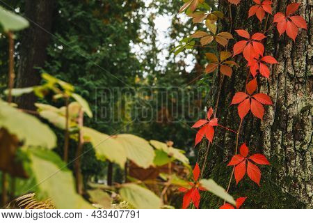 Majestic Seasonal Garden Plants Floral Scenic View Of Red Foliage And Green Bush Wood Land Environme