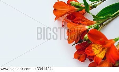 Bouquet Of Red Alstroemeria On White Background, Copy Space