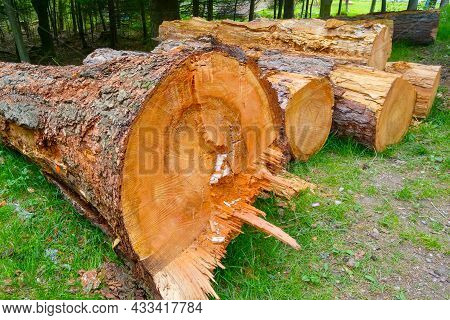 Trunks Of Felled Trees In The Forest. Deforestation, Destruction Of Nature.
