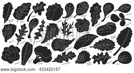 Lettuce And Salad Black Vector Set Of Icon.black Vector Set Illustration Leaf Of Lettuce. Isolated I