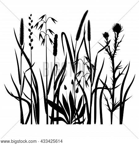 Silhouettes Of Cereals And Field Grasses On A White Background