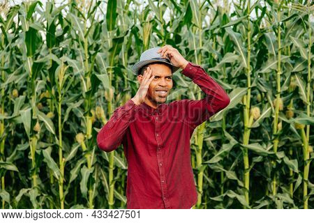 Portrait Of Confused Male Afro American Farmer Scratching His Head In Corn Field. Farmers Stressed
