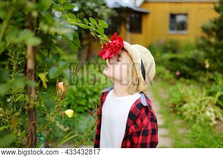 Little Boy In A Straw Hat Sniffing A Red Fragrant Rose In Domestic Garden. Child Having Fun In The B