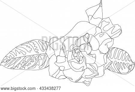 Gartenia Flower With Leaves Spring. Doodle Style. Vector Stock Illustration Isolated On White Backgr