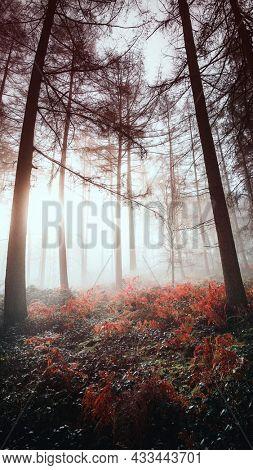 Sunlight shining through the misty woods mobile phone wallpaper