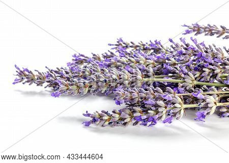 Lavender Flower Bouquet On A White Background. A Bunch Of Lavandula Plants, Aromatic Herb