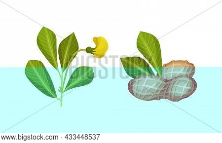 Coffee Plant Seedlings Set. Planting And Growing Coffee Tree Vector Illustration