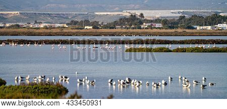 Las Salinas In Cabo De Gata, Almeria. Flamingos Lake In Spain