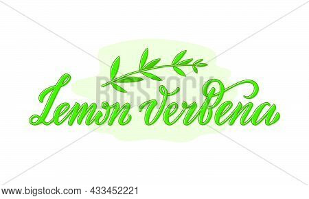 Vector Illustration Of Lemon Verbena Lettering For Packages, Product Design, Banner, Spice Shop, Pha