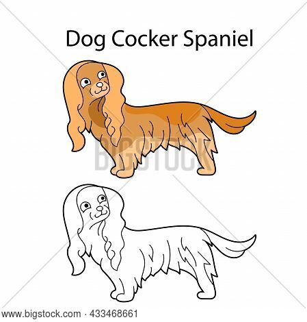 Pretty Dog. Breed Cocker Spaniel. Funny Animal Isolated On White Background. Linear, Monochrome And