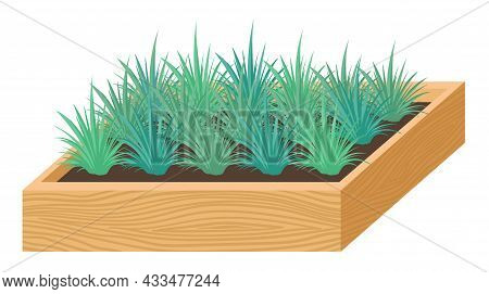 Seedlings, Plants For Home And Garden, Plants In A Box