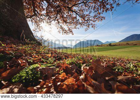 Autumn Colored Orange Leaves Under A Oak Tree With View On Alpine Landscape, Mieminger Plateau, Tiro