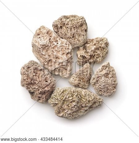 Top view of limestones with fossils embedded on surface isolated on white