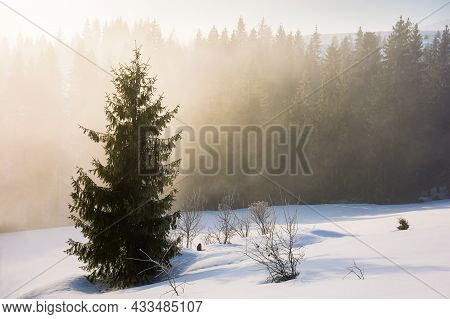 Tree On The Snow Covered Hill. Winter Scene With Mist Glowing Morning Light. Coniferous Forest In Th